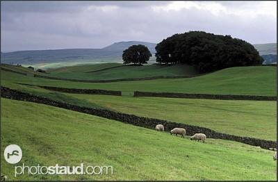 Krajina severní Anglie, Yorkshire