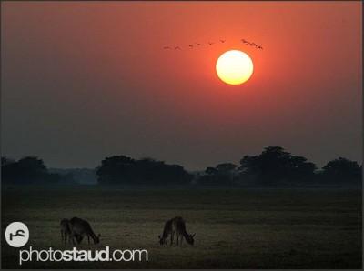 zambia-kafue-landscape-001