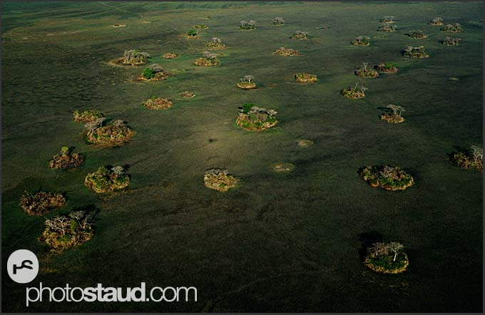 Islets of trees in the landscape of Kafue National Park, aerial photographs, Zambia