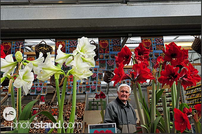 Bloemenmarkt, Flower market Amsterdam, Holland, The Netherlands, Europe