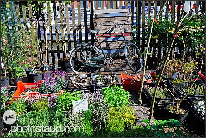 Bike and flowers, Amsterdam, Holland, The Netherlands, Europe