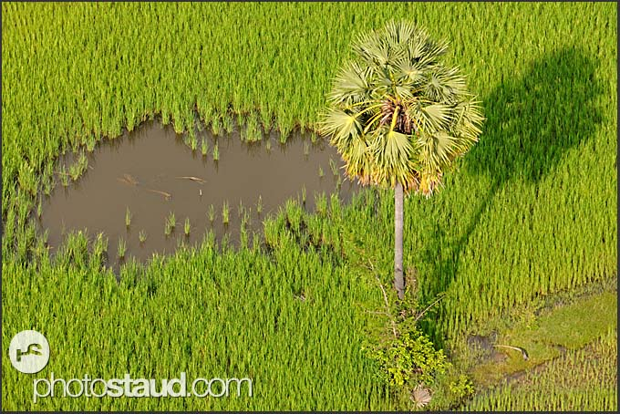 Aerial photograph of Cambodian landscape