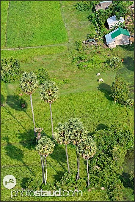 Aerial photograph of Cambodian village