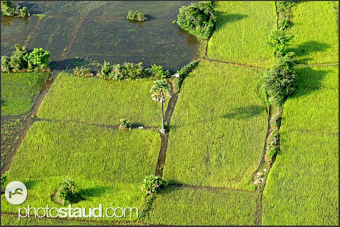 Aerial photograph of Cambodian farmland