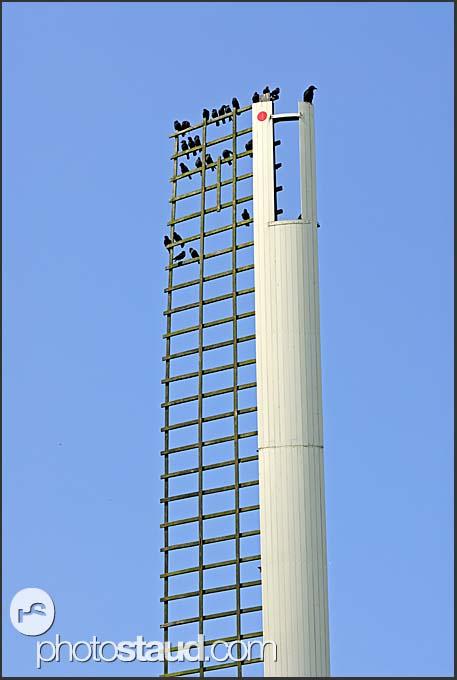 Birds sitting on windmill blade, Holland, Europe