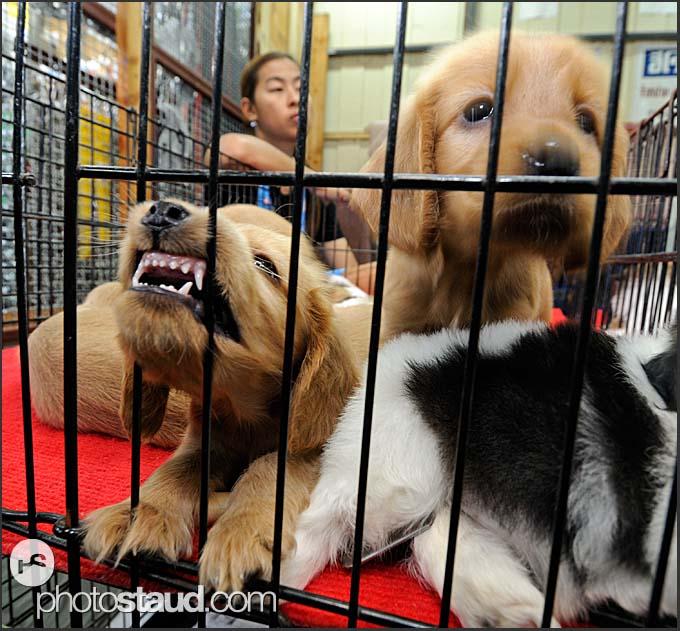 Selling pets in Chatuchak Weekend Market, Bangkok, Thailand