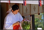 Shinto priest trimming flowers in Gokoku Shrine, Sendai, Japan