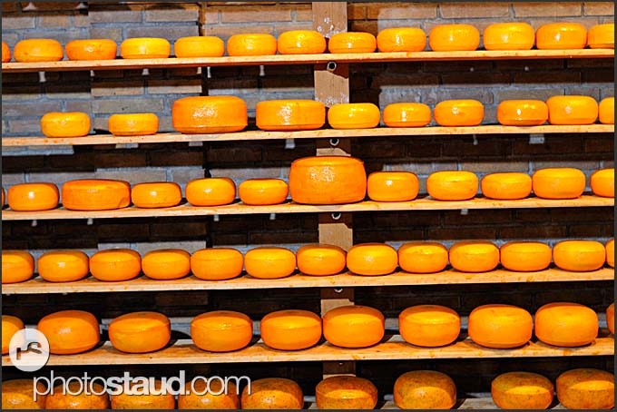 Shelf full of Dutch cheese at Alida Hoeve, traditional Dutch farm in Volendam, Holland, Europe