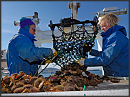 Commercial fishermen with catch aboard their boat, Breidafordur, Iceland