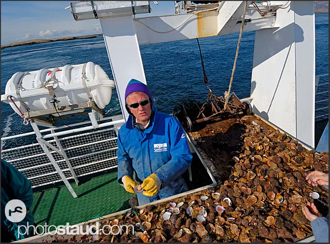 Commercial fisherman with catch aboard his boat, Breidafordur, Iceland