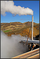 Irises and geothermal steam in Hveragerdi, Iceland