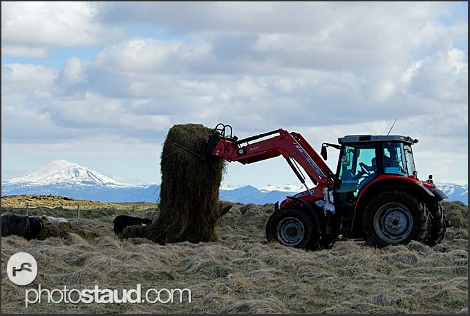 Tractor working in sheep farm with Mt. Hekla in the background, Iceland
