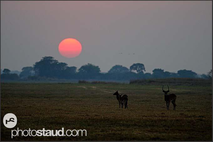 Morning landscape of Kafue National Park, Zambia
