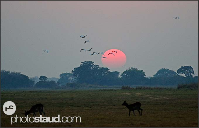 Antelopes and birds in the morning landscape of Kafue National Park, Zambia