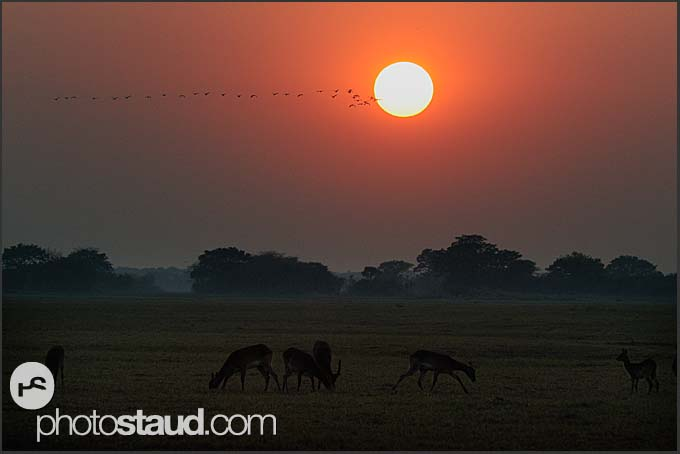 Antelopes in the morning landscape of Kafue National Park, Zambia