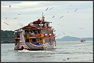 Flock of seagulls accompanies boat in the Matsushima Bay, Japan