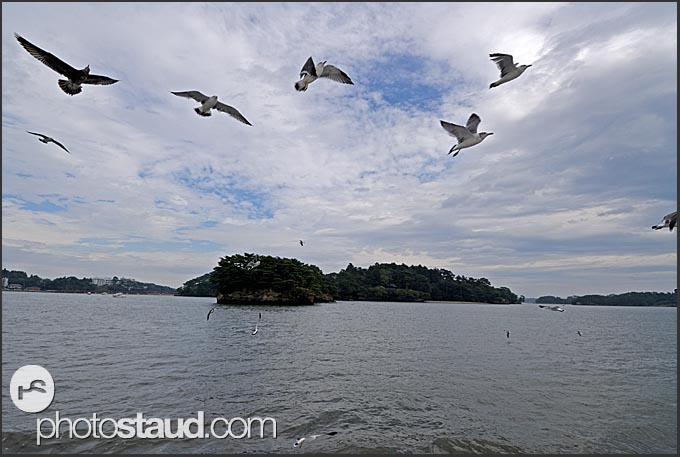Seagulls accompanying boat in the Matsushima Bay, Japan