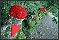 Row of red-bibbed Jizo bodhisattva statues in Nikko National Park, Japan