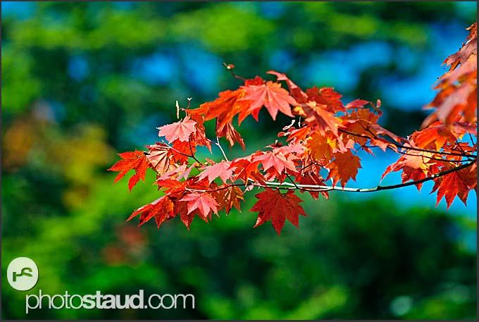 Autumnal foliage of Nikko National Park landscape, Japan