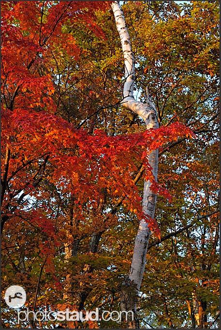 Autumnal foliage in Japan Alps, Shiga Kogen Heights, Joshin-etsu National Park, Japan