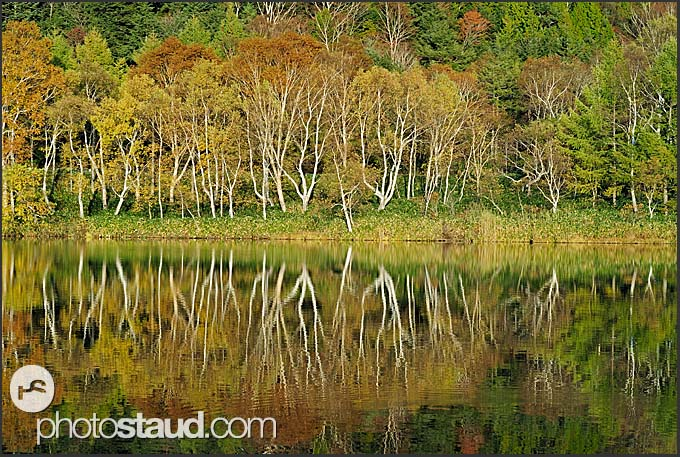 Autumnal landscape reflected in Kidoike pond, Shiga Kogen Heights, Joshin-etsu National Park, Japan