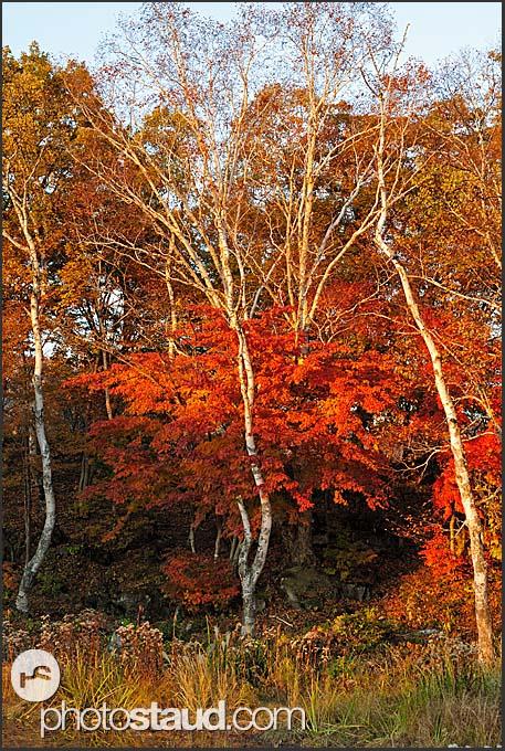 Autumnal foliage of the Japan Alps, Shiga Kogen Heights, Joshin-etsu National Park, Japan