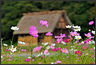 Rural farm houses, built in gassho zukuri, hands in prayer, UNESCO World Heritage site, Shirakawa village, Japan