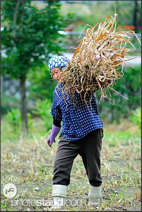 Japanese farmer working in the field in Shirakawa village, Japan