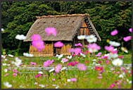 Flowers and rural farm house, built in gassho zukuri style, UNESCO World Heritage site, Shirakawa village, Japan