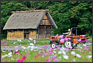 Flowers and rural farm house, built in gassho zukuri style, UNESCO World Heritage site, Shirakawa village, Japan