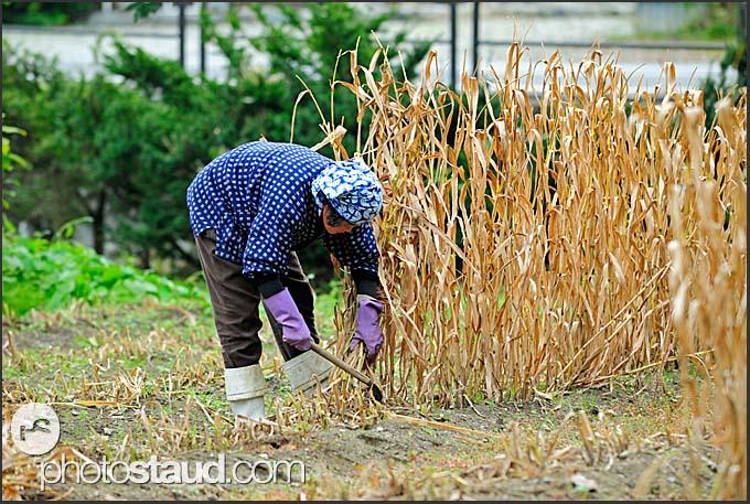Farmer working in the field in Shirakawa village, Japan