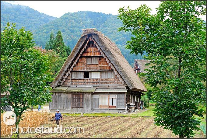 Farmer working in the field before gassho zukuri rural farmhouse, Shirakawa village, UNESCO World Heritage site, Japan