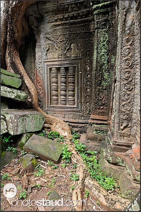 Stone carvings in the walls of ta prohm temple angkor