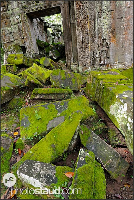 Moss-covered ruins of Ta Prohm Temple, Angkor, Cambodia