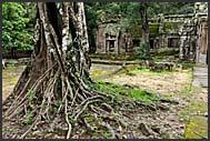 Kapok tree invades Ta Prohm Temple, Angkor, Cambodia