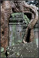 The jungle encroaches on Ta Prohm Temple, Angkor, Cambodia