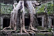 Carvings on the walls of Ta Prohm Temple, Angkor, Cambodia