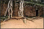 Beautiful ruins of Ta Prohm Temple, Angkor, Cambodia