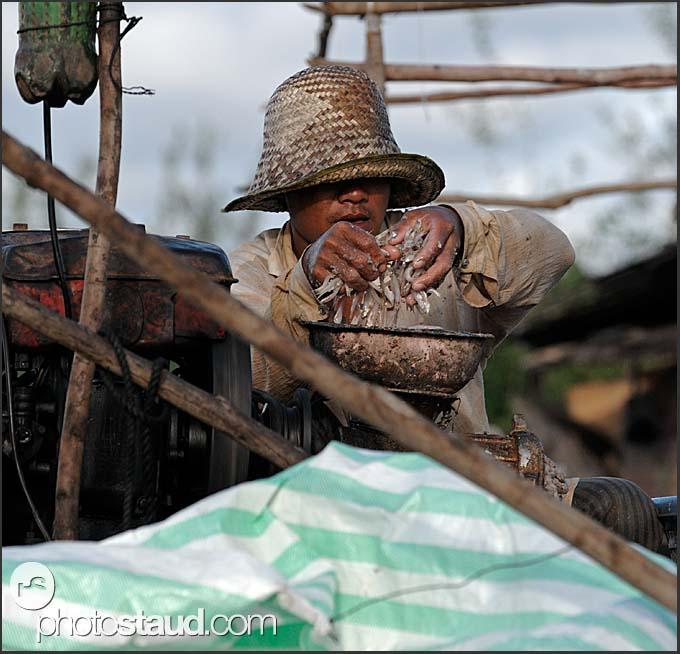 Fish processing in Tonle Sap Lake, Cambodia