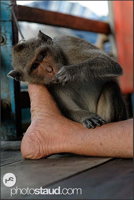 Monkey and foot, Tonle Sap Lake, Cambodia