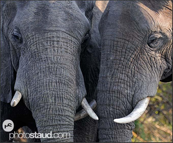 Of mosi oa tunya np african elephant mosi oa tunya national park