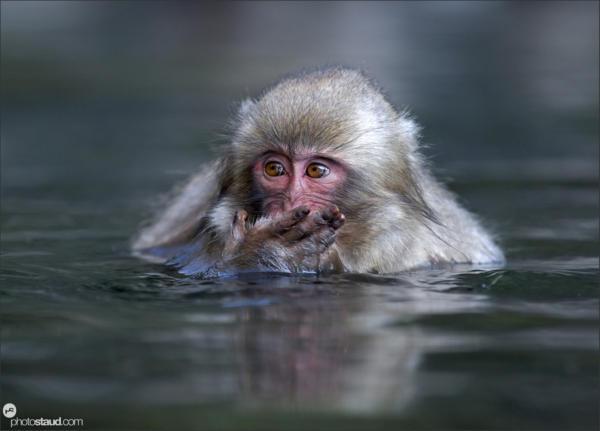 japan-nagano-macaques-007
