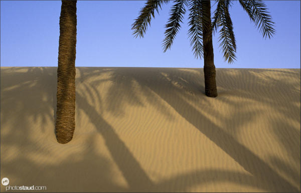 Palm trees projecting shadows on the dunes of Libyan Desert, Egypt