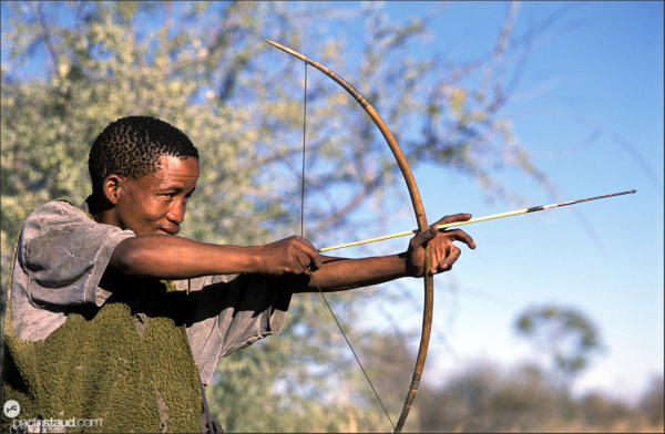 Bushman hunter taking aim with his bow, Namibia
