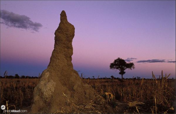 Termite mound at sunset, Kalahari Desert, Bushmanland, Namibia