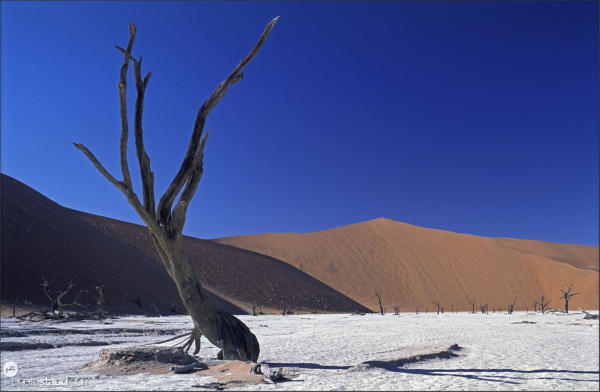 Surreal landscape of the Namib Desert, Namibia
