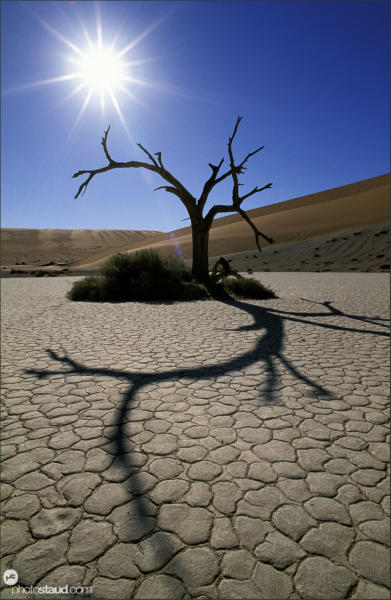 Dead Acacia Tree and sun in Hidden Vlei pan, Namib Desert, Namibia