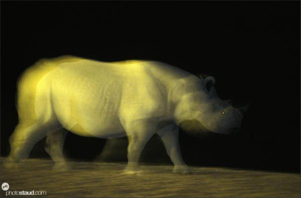 Nighttime photography of rhinos in Etosha National Park, Namibia
