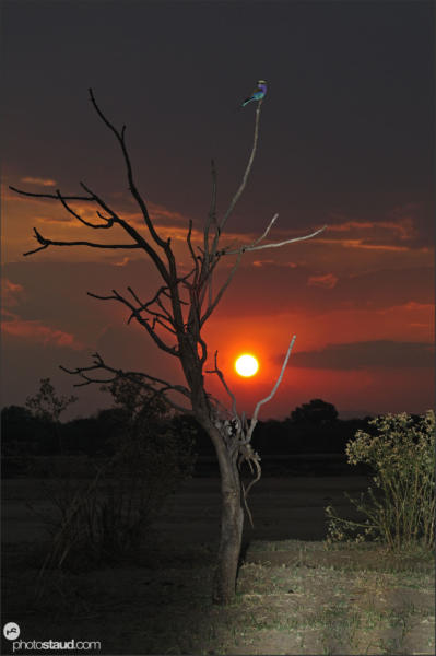 South Luangwa landscape, Zambia