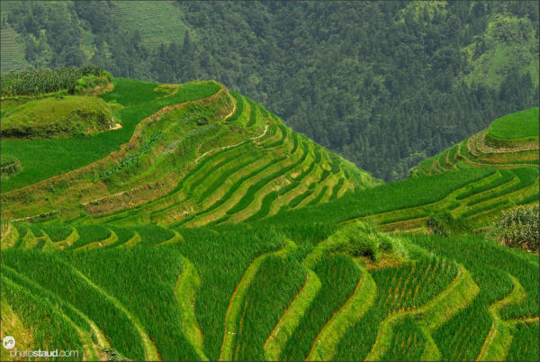 Stunning shapes of Longji terraced fields, Guangxi, China